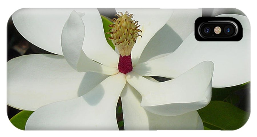 Magnolia Grandiflora IPhone Case featuring the photograph Magnolia II by Suzanne Gaff