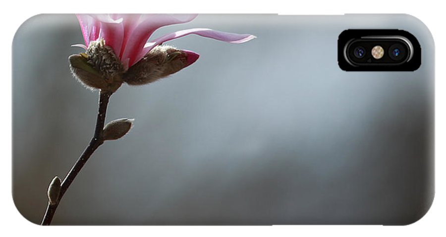 Pink IPhone X Case featuring the photograph Magnolia In Sun by Rebecca Cozart