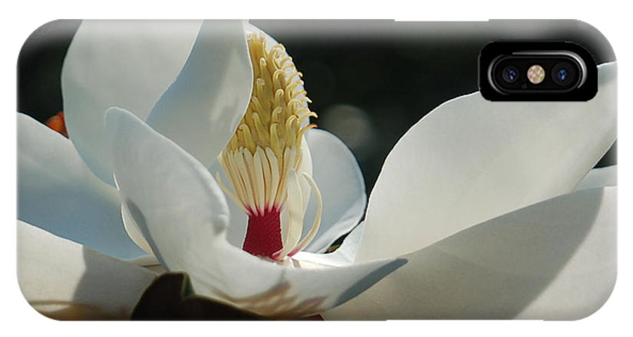 Magnolia IPhone Case featuring the photograph Magnolia Tiny Gem by Suzanne Gaff