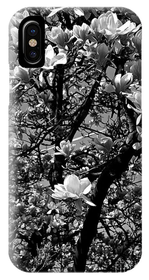 Magnolia IPhone X Case featuring the photograph Magnolias In White by Frank J Casella
