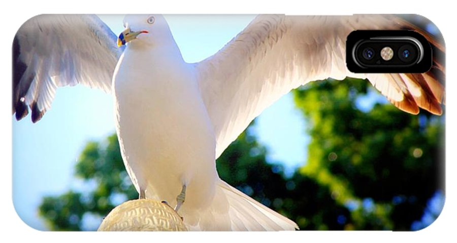 Seagull IPhone X Case featuring the photograph Majestic Seagull II by Aurelio Zucco