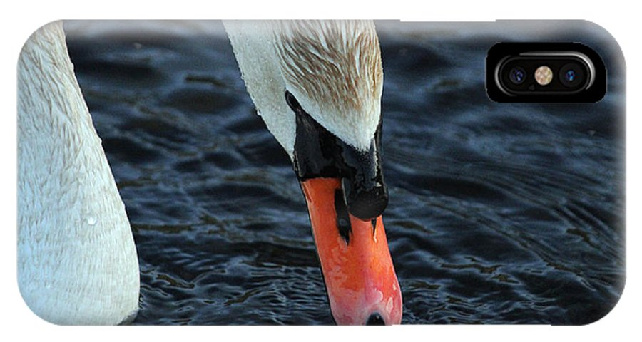 Swan IPhone X Case featuring the photograph Majestic Swan by Jake Danishevsky