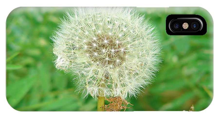 Dandelion IPhone X Case featuring the photograph Make A Wish by Lew Davis