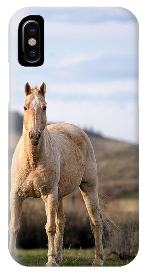 Horse IPhone X Case featuring the photograph Making Eye Contact by Liz Mackney
