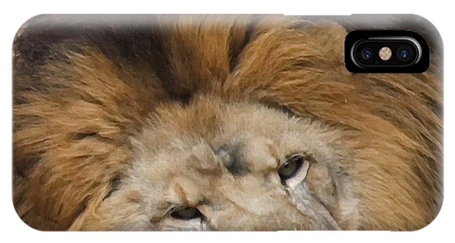 Lion IPhone X Case featuring the photograph Male African Lion by Cathy Lindsey