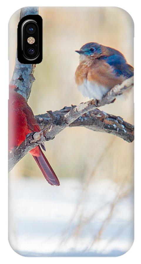 Redbird IPhone X Case featuring the photograph Male Bluebird and Cardinal on Branch by Douglas Barnett