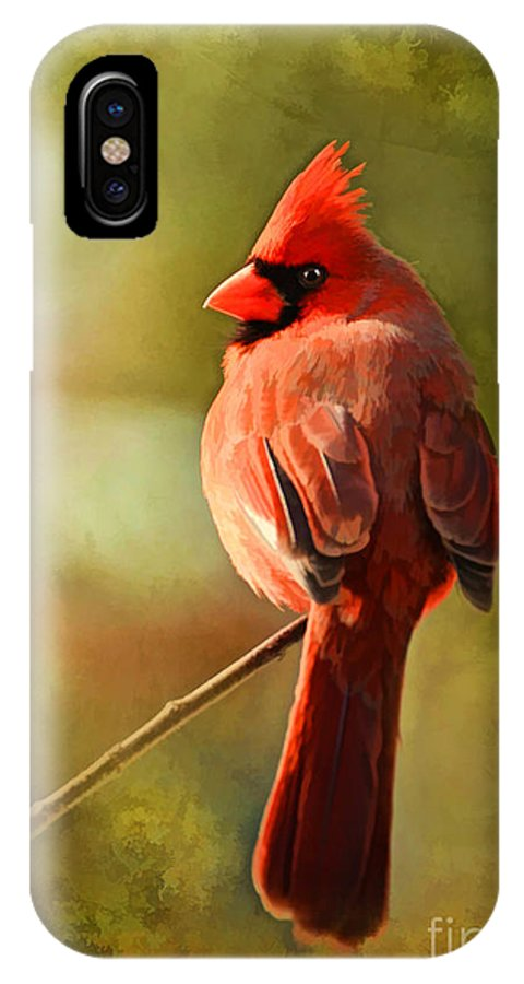 Cardinal IPhone X Case featuring the photograph Male Cardinal In The Sun - Digital Paint by Debbie Portwood
