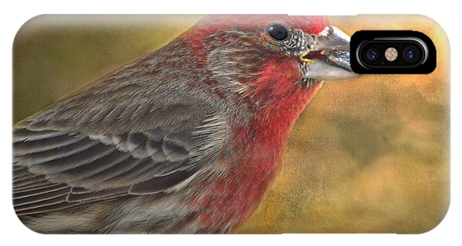 Nature IPhone X Case featuring the photograph Male Finch With Seed by Debbie Portwood