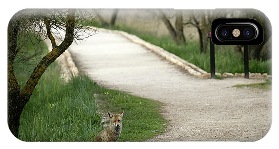 Tranquility IPhone X Case featuring the photograph Male Red Fox Vulpes Vulpes by David Santiago Garcia