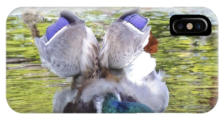 Duck IPhone X Case featuring the photograph Mallard Drake Stretch by L J Oakes