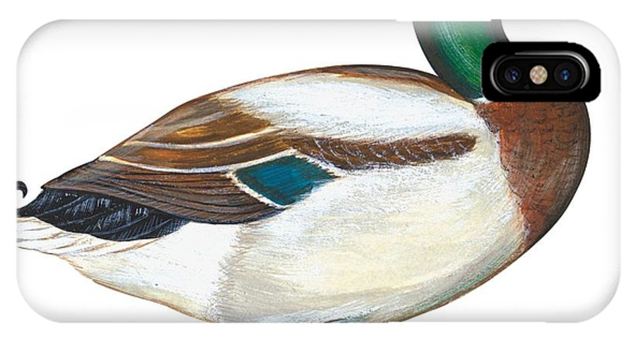 No People; Horizontal; Side View; Full Length; White Background; One Animal; Wildlife; Close Up; Zoology; Illustration And Painting; Bird; Beak; Feather; Web; Animal Pattern; Colorful; Mallard Duck; Anas Platyrhynchos IPhone X Case featuring the painting Mallard Duck by Anonymous