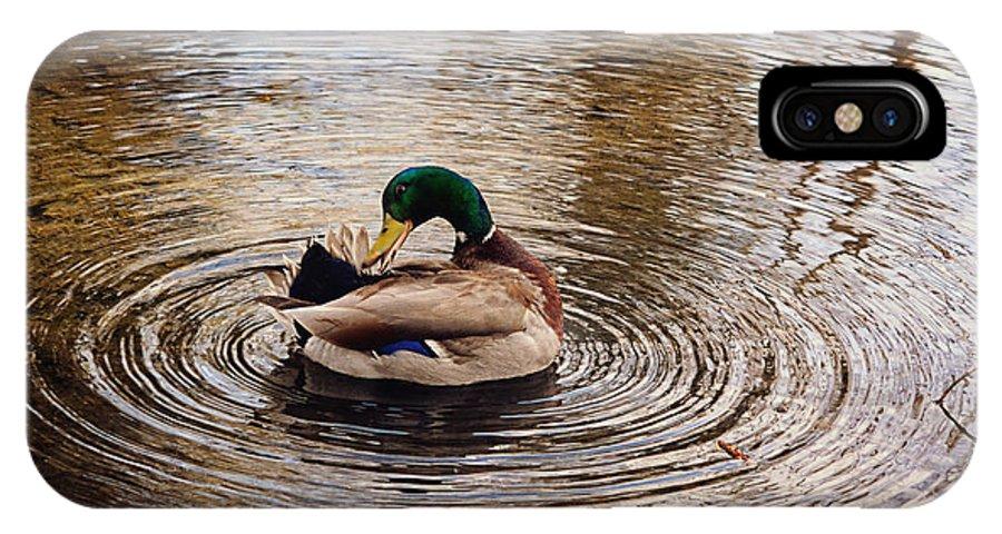 Mallard Duck IPhone X Case featuring the photograph Mallard Duck by Maria Angelica Maira