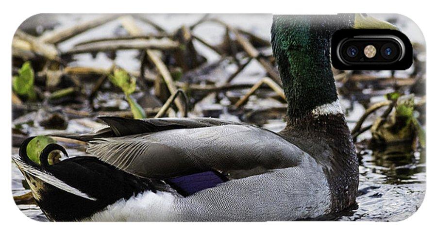 Mallard IPhone X Case featuring the photograph Mallard On San Jacinto River by Bill Staney