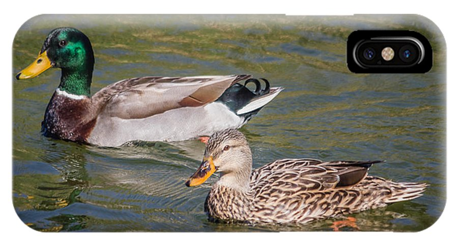 Florida IPhone X Case featuring the photograph Mallard Pair by Jane Luxton