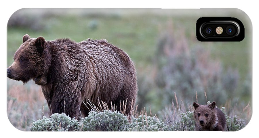 Grizzly IPhone X Case featuring the photograph Mama Grizzly Guiding Cub by Natural Focal Point Photography