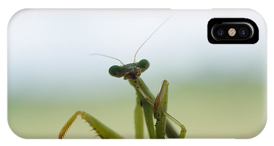 Praying IPhone X Case featuring the photograph Mantis by Randy Roberts