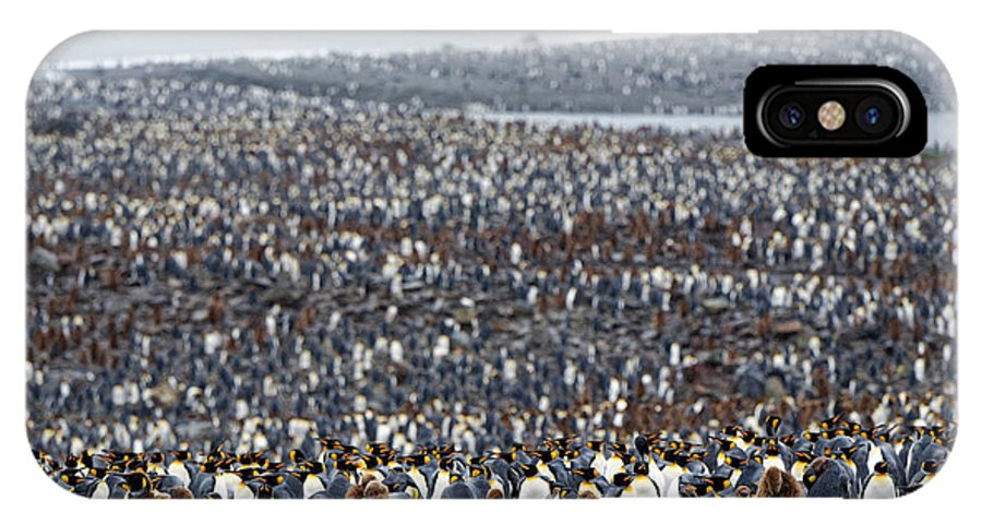 Penguin IPhone X Case featuring the photograph Many by Kahi