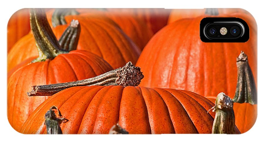 Pumpkins IPhone X Case featuring the photograph Many Pumpkins In A Row Art Prints by Valerie Garner