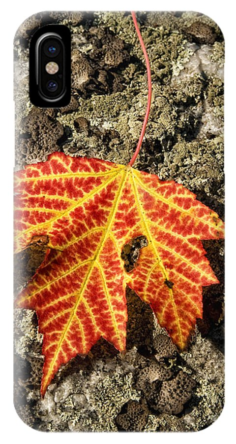 Fall IPhone X Case featuring the photograph Maple Leaf by Claudia Kuhn