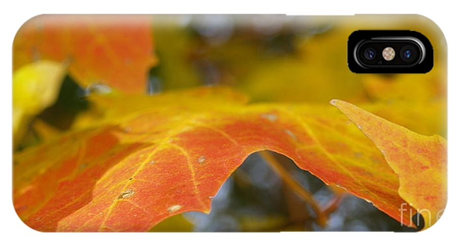 Leaves IPhone X Case featuring the photograph Maple Leaf Edges in Autumn by Anna Lisa Yoder