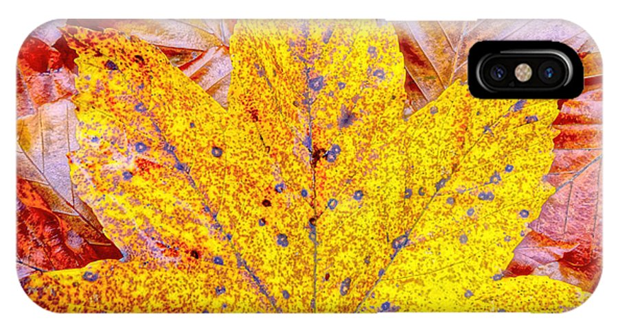 Maple IPhone X Case featuring the photograph Maple Leaf In Fall by M Bleichner