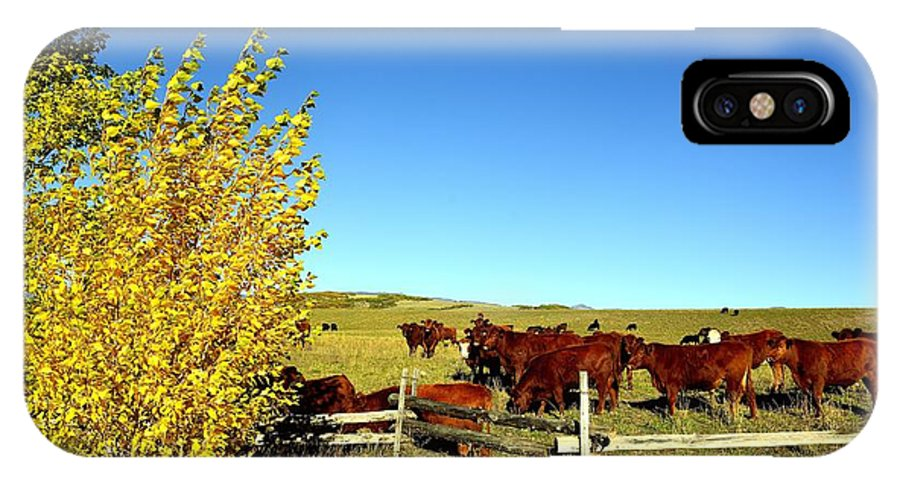 Marabou IPhone X / XS Case featuring the photograph Marabou Cattle Herd by Gerald Blaine