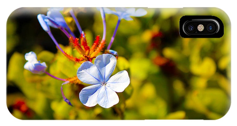 Purple IPhone X Case featuring the photograph March Flower by Ryan Rodriguez