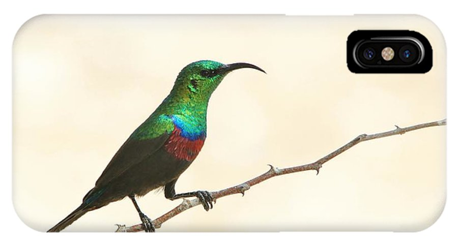 Africa IPhone X / XS Case featuring the photograph Marico Sun-bird Colors by Hermanus A Alberts