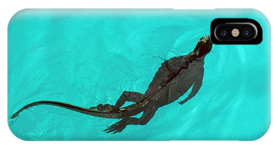Marine Iguana IPhone X Case featuring the photograph Marine Iguana (amblyrhynchus Cristatus) Swimming by John Beatty/science Photo Library