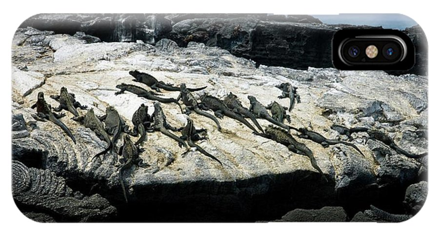 Amblyrhynchus Cristatus IPhone X Case featuring the photograph Marine Iguanas by Steve Allen/science Photo Library