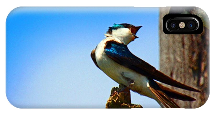 Tree Swallows IPhone X Case featuring the photograph Married Life by Rob Hawker