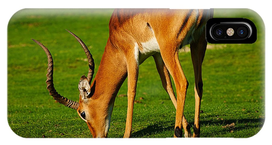 Closeup IPhone X Case featuring the photograph Mature Male Impala On A Lawn by Nick Biemans