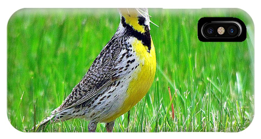 Wonderful Song And A Sure Sign Of Spring IPhone X Case featuring the photograph Meadowlark by John Cole
