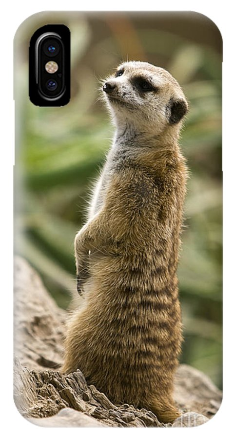 Adapted Photographs IPhone X Case featuring the photograph Meerkat Mongoose Portrait by David Millenheft
