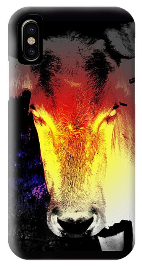 Cow IPhone X Case featuring the photograph A Strange Meeting In The Dark Night by Hilde Widerberg
