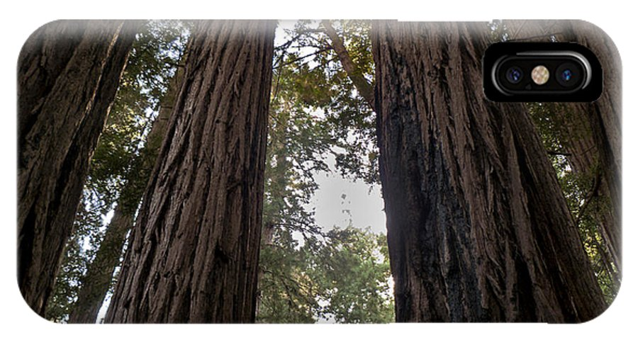 Sequoia IPhone X Case featuring the painting Meeting Of The Sequoias by David Kehrli