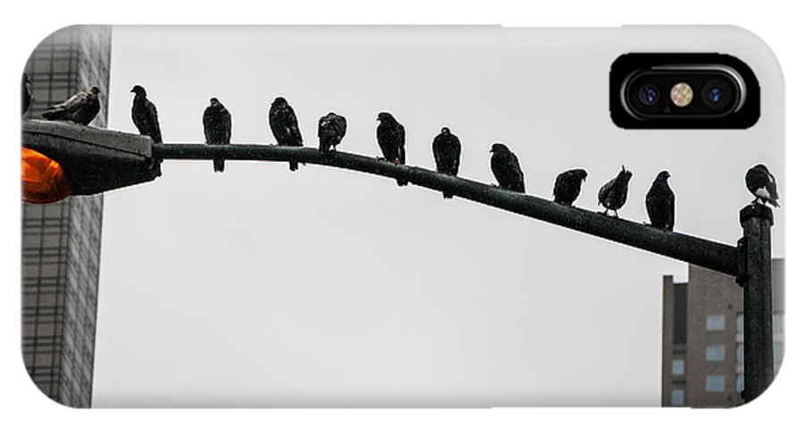 Pigeon IPhone X Case featuring the photograph Meeting by Tomas Stupka