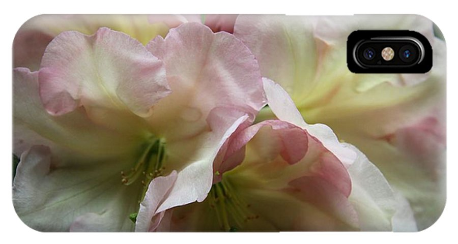 Rhododendron IPhone X Case featuring the photograph Mellow Pink by Christiane Schulze Art And Photography