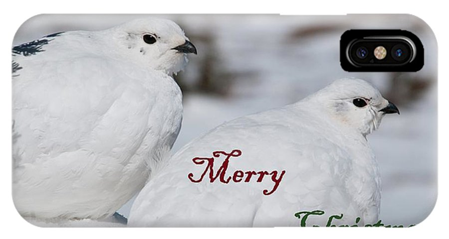 White-tailed Ptarmigan IPhone X Case featuring the photograph Merry Christmas - Winter Ptarmigan by Cascade Colors