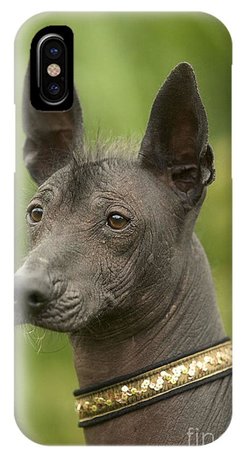 Mexican Hairless IPhone X / XS Case featuring the photograph Mexican Hairless Dog by Jean-Michel Labat