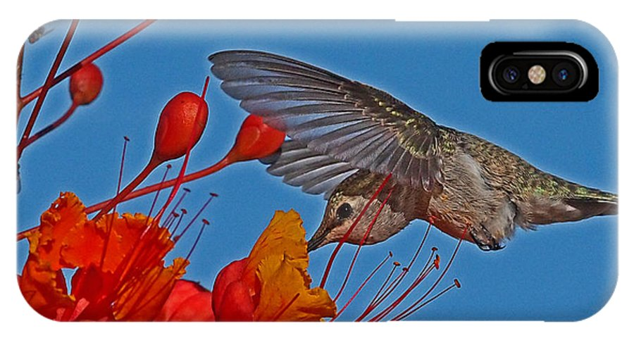 Birds IPhone X Case featuring the photograph Mid Day Snack by John Kulberg