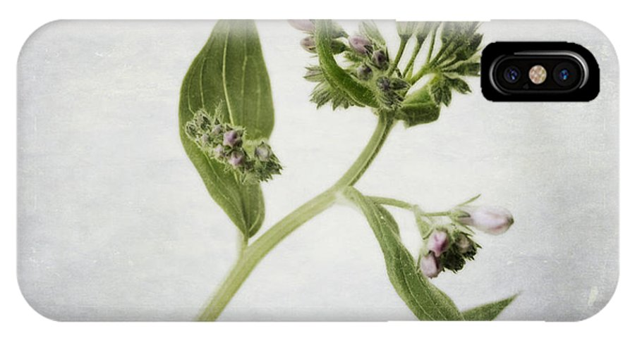 Tall Lungwort IPhone X Case featuring the photograph Mid Summer Scent by Priska Wettstein