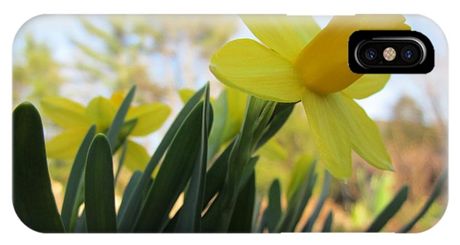 Daffodils IPhone X Case featuring the photograph Mini Daffodils by MTBobbins Photography
