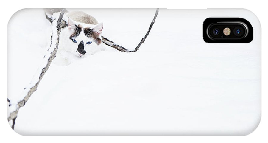 Cat IPhone X Case featuring the photograph Minimal Cat by Theresa Tahara