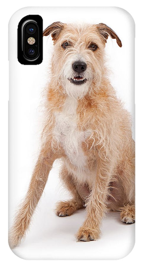 Dog IPhone X Case featuring the photograph Mixed Breed Large Scruffy Dog by Susan Schmitz