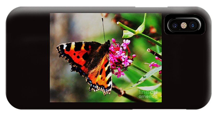 Monarch Butterfly Vivid Orange And Black Wings Blue Highlights Outdoors Beauty Close Up Nature Pink Flowers Bray Ireland Greenery Greeting Card Canvas Print Metal Frame Poster Print Available On T Shirts Throw Pillows Tote Bags Shower Curtains Mugs And Phone Cases IPhone X Case featuring the photograph A Monarch In Ireland # 2 by Marcus Dagan