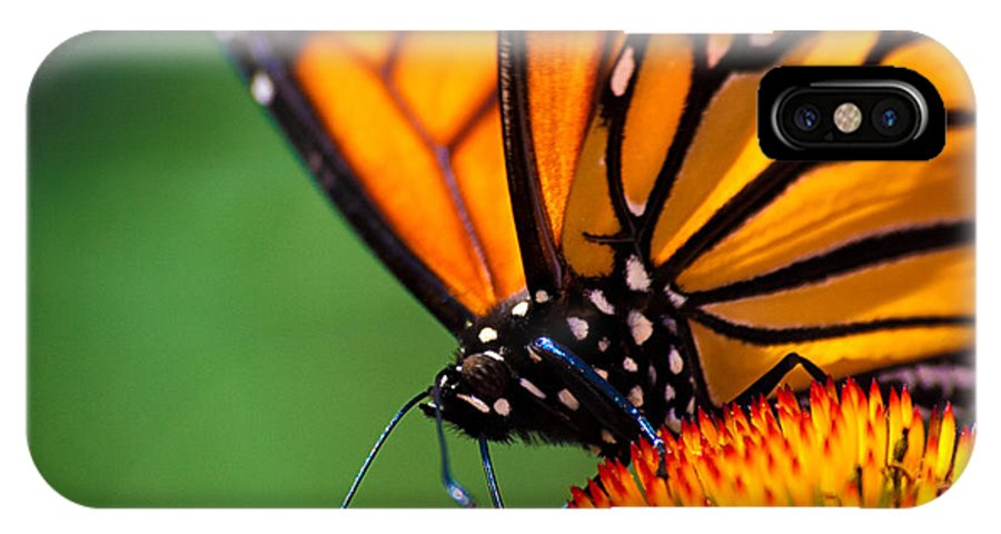 Monarch IPhone X Case featuring the photograph Monarch Butterfly Headshot by Bob Orsillo