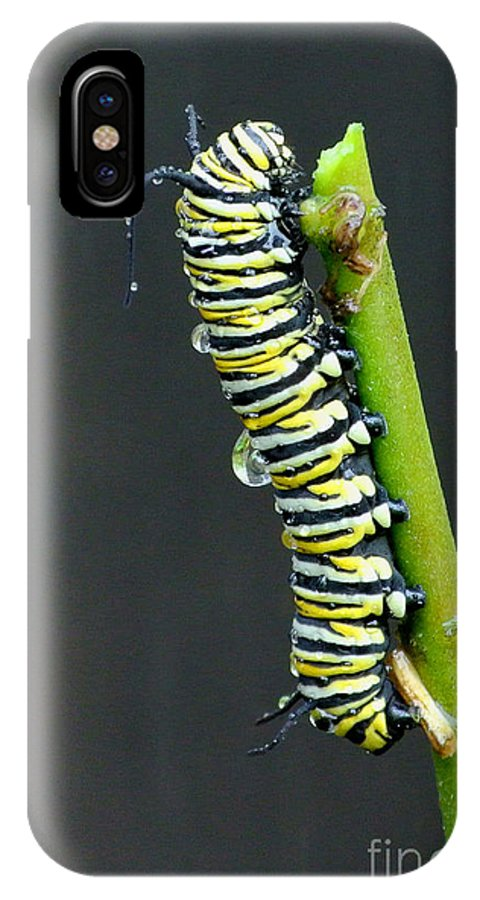 Monarch Caterpillar IPhone X Case featuring the photograph Monarch Caterpillar by Denise Thompson