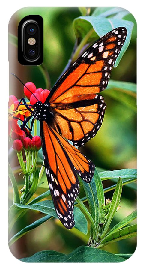 Monarch IPhone X Case featuring the photograph Monarch by Dan Dennison