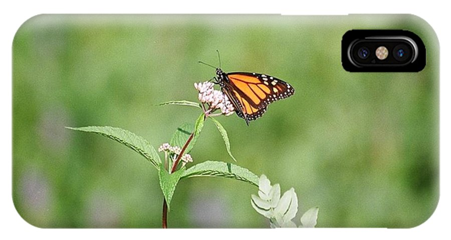 Butterfly IPhone X Case featuring the photograph Monarch by David Porteus